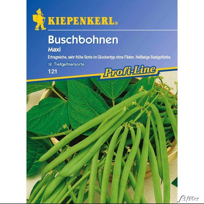 Buschbohne 'Maxi'