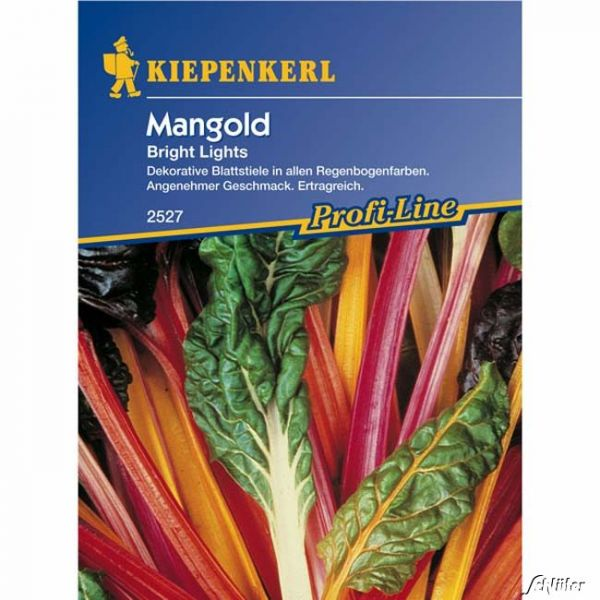 Mangold 'Bright Lights' Beta vulgaris var. vulgaris Bild