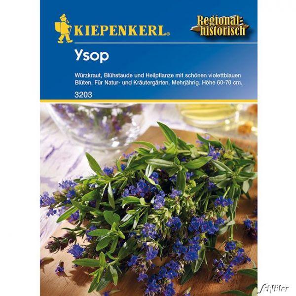 Ysop - Würzkraut Hyssopus officinalis Bild