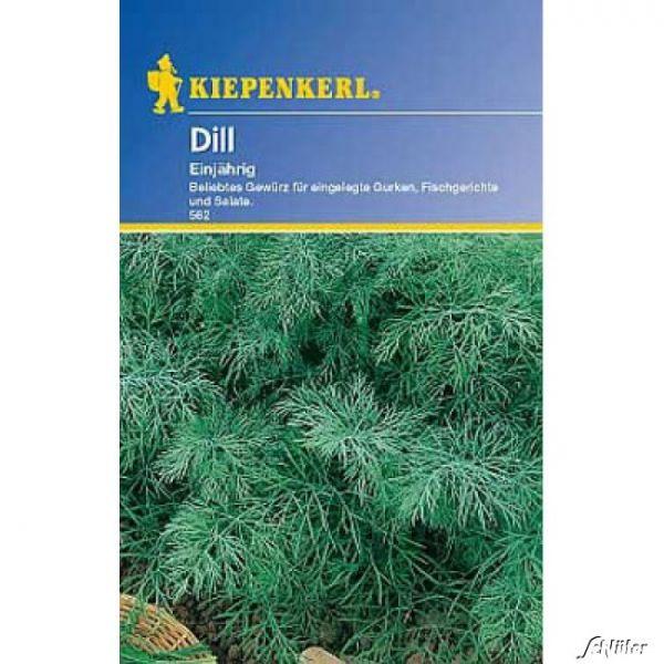 Dill Anethum graveolens var. hortorum Bild