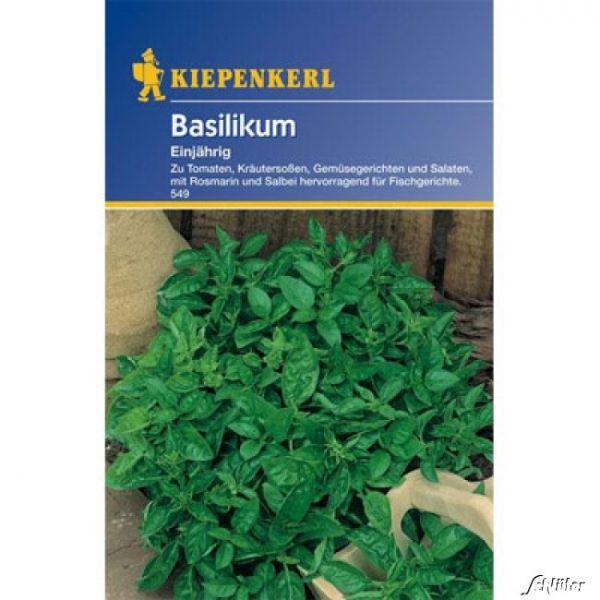 Basilikum, einjährig Ocimum basilicum Bild