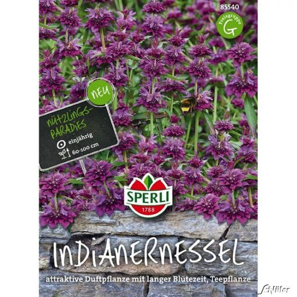 Sperlings Indianernessel Monarda citriodora Bild