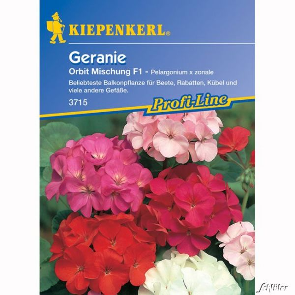 Geranie 'Orbit Mischung' Pelargonium x zonale Bild