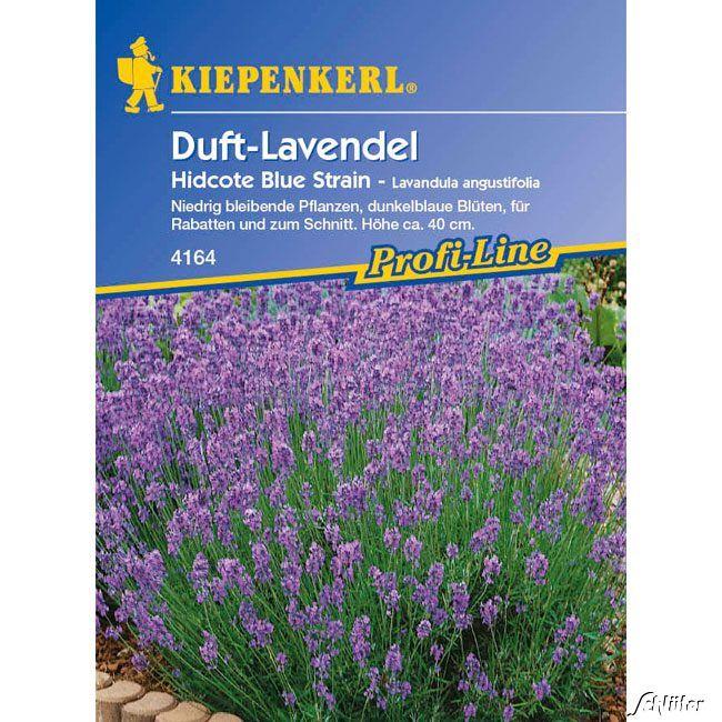 Duft-Lavendel 'Hidcote Blue Strain'