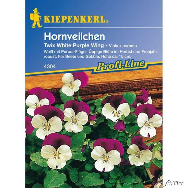 Hornveilchen 'Twix White Purple Wing' Viola x cornuta 'Twix White Purple Wing' Bild