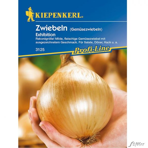 Zwiebeln Exhibition Allium cepa Bild