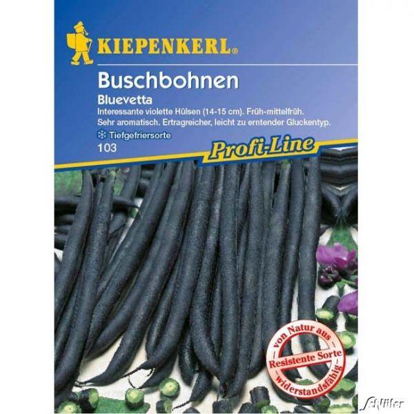 Buschbohne 'Bluevetta' Phaseolus vulgaris var. nanus Bild