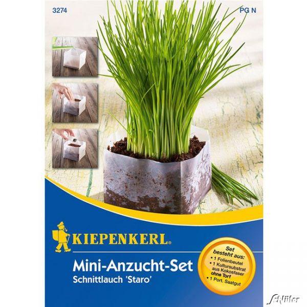 Schnittlauch 'Staro' - Mini-Anzuchtset Allium schoenoprasum Bild
