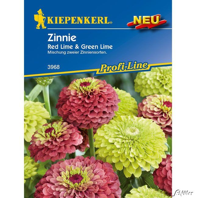 Garten-Schlueter.de: Zinnie Red Lime Green Lime
