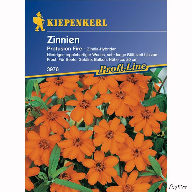 Zinnie 'Profusion Fire'