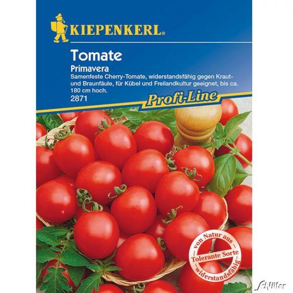 Tomaten (Cherry) 'Primavera' Lycopersicon esculentum Bild