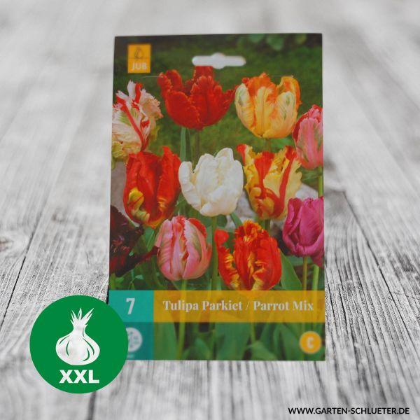 Papageientulpen Mischung 'Parrot Mix' - 7 Stück Tulipa Bild