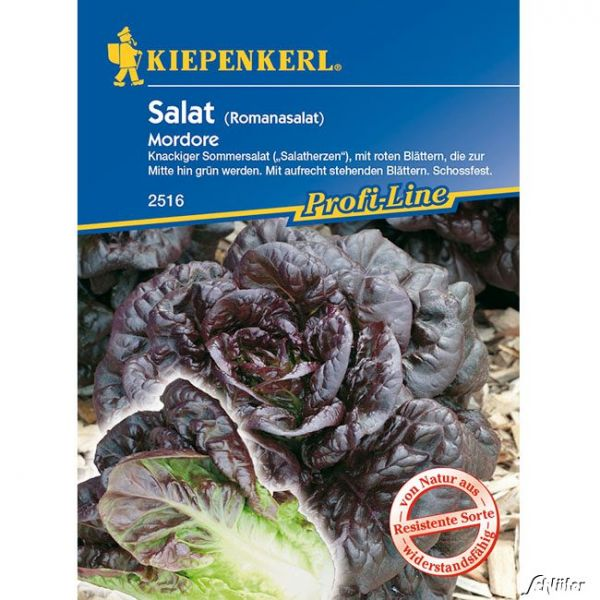 Romana-Salat 'Mordore' Lactuca sativa var. langifolia 'Mordore' Bild