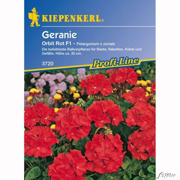 Geranie 'Orbit Rot' Pelargonium x zonale Bild