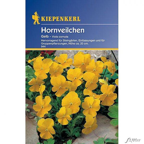 Hornveilchen 'Gelb' Viola x cornuta 'Gelb' Bild