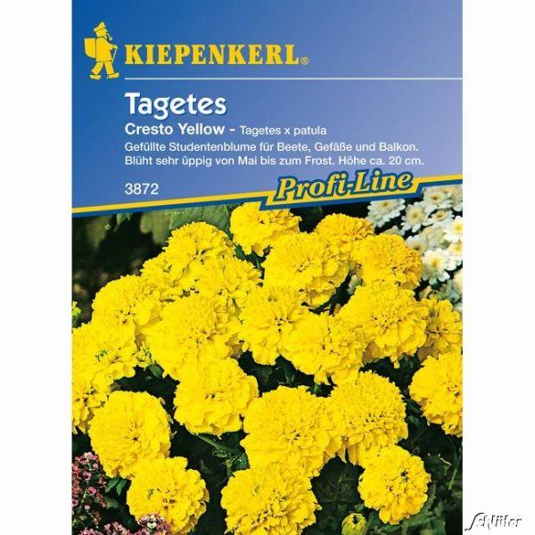Tagetes 'Cresto Yellow' Tagetes patula Bild