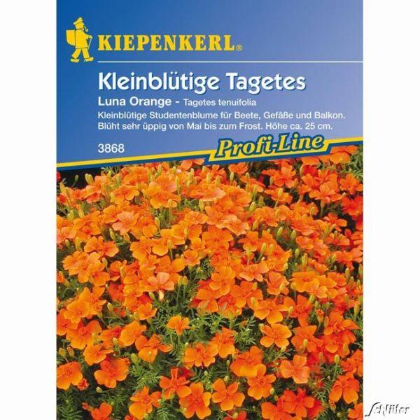 Tagetes 'Luna Orange' Tagetes tenuifolia Bild