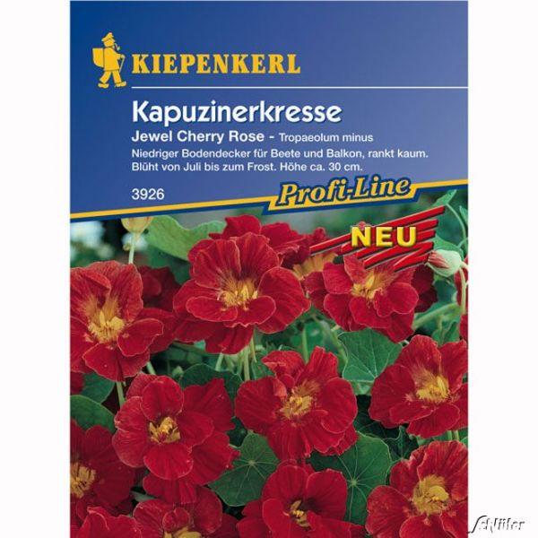 Kapuzinerkresse 'Jewel Cherry Rose' Tropaeolum minus Bild