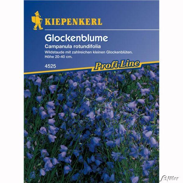 Glockenblume Campanula rotundifolia Bild