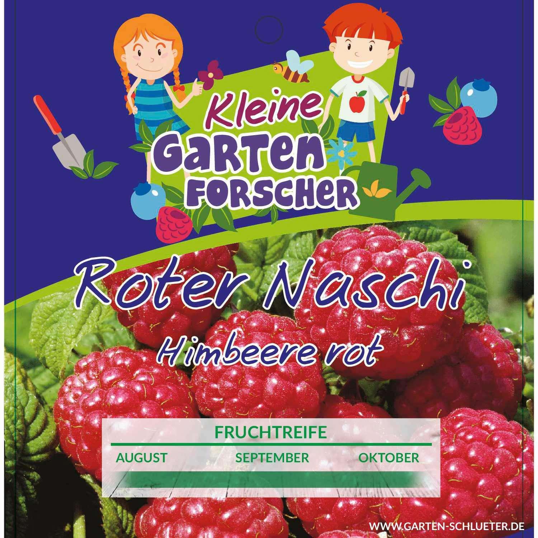 Rote Himbeere Roter Naschi Kleine Gartenforscher Garten Schlüter