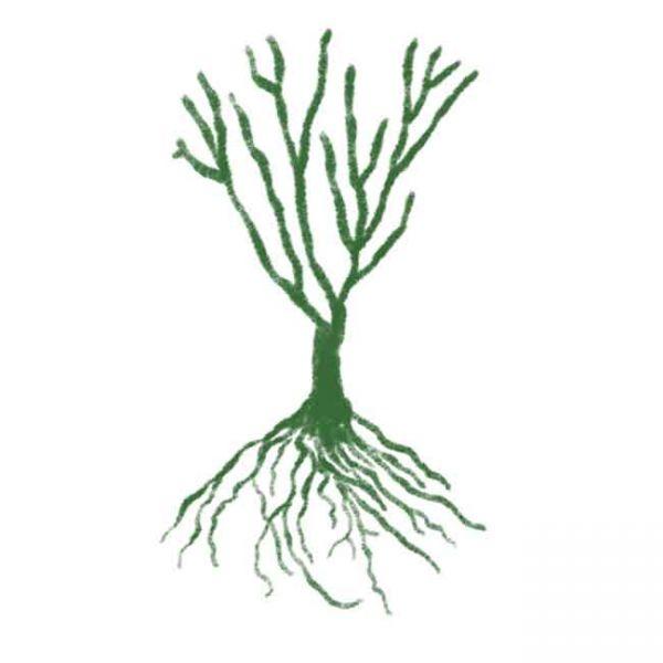 Wurzelnackte Pflanze