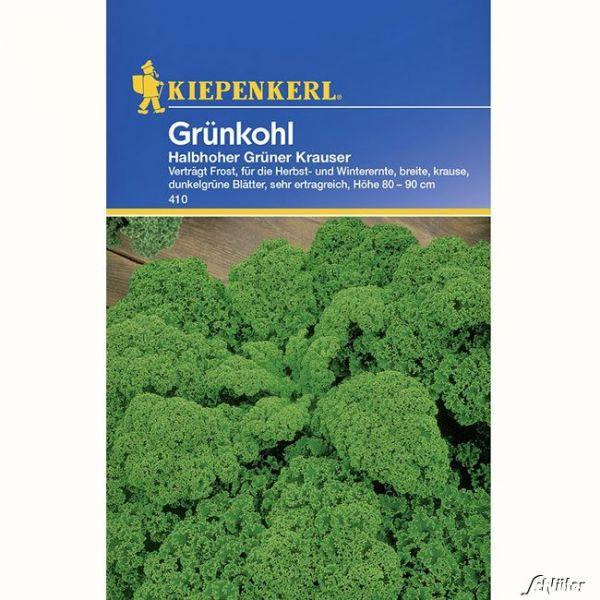Grünkohl 'Halbhoher grüner Krauser' Brassica oleracea var. sabellica Bild