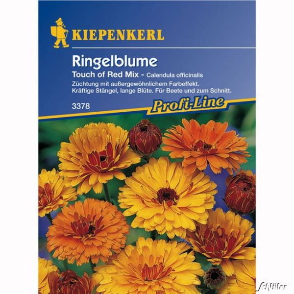 Ringelblumen 'Touch of Red Mix' Calendula officinalis Bild