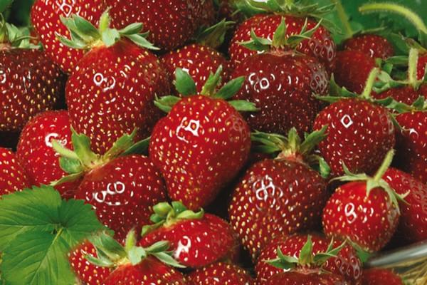 Erdbeere_Praline