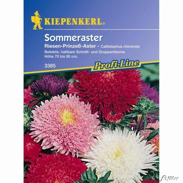 Sommeraster 'Prinzess-Mischung' Callistephus chinensis Bild