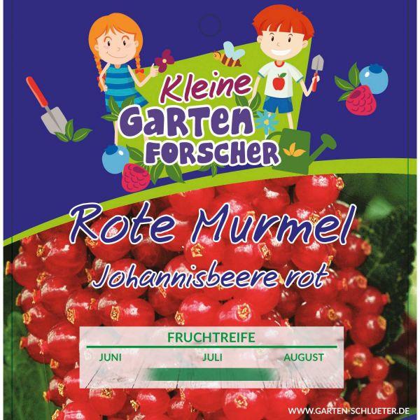 Rote Johannisbeere 'Rote Murmel' - Kleine Gartenforscher Ribes rubrum Bild