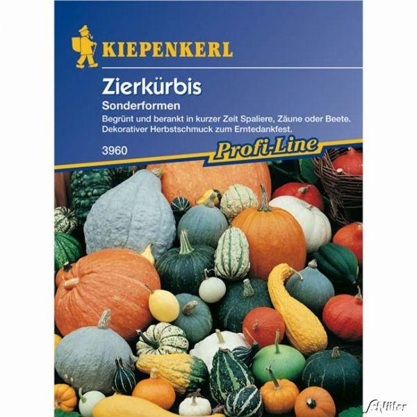 Zierkürbis 'Sonderformen-Mischung' Cucurbita pepo Bild