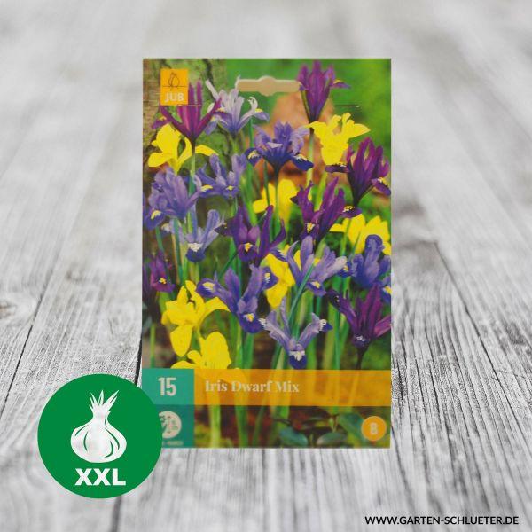 Zwergiris-Mischung - 15 Stück Iris Bild
