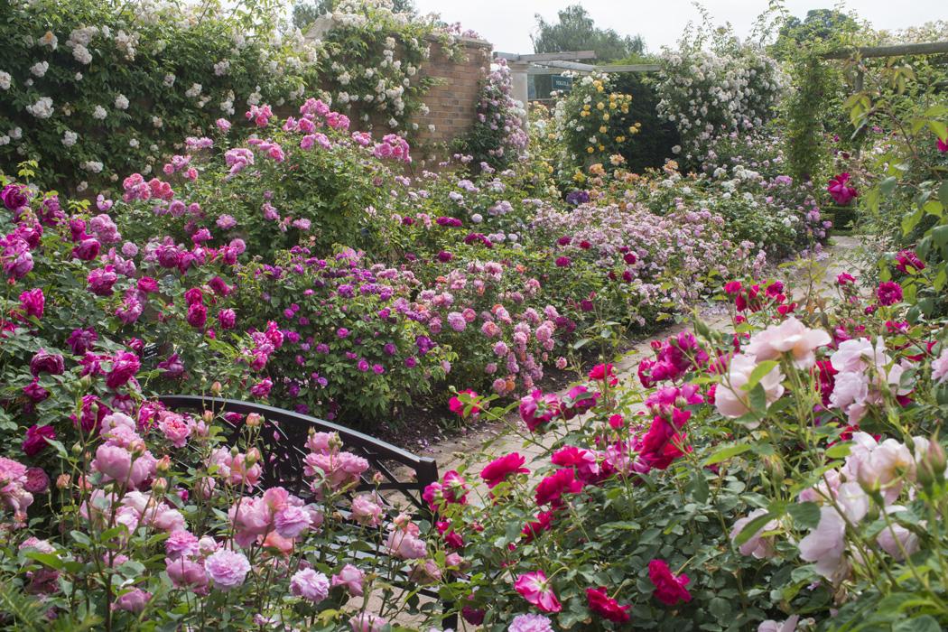 Bekannt Rosen umpflanzen / verpflanzen | Gartenträume OI67