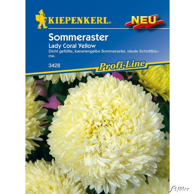 Aster 'Lady Coral Yellow'