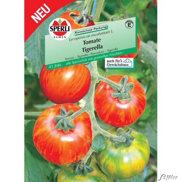 Tomate Sperlings 'Tigerella' Lycopersicon esculentum L. Bild