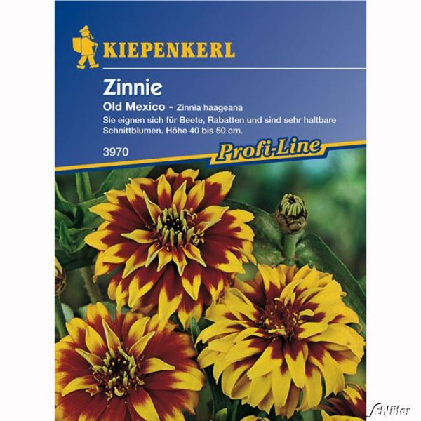 Zinnie 'Old Mexiko' Zinnia haageana Bild