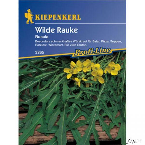 Rucola (Wilde Rauke) Diplotaxis tenuifolia Bild