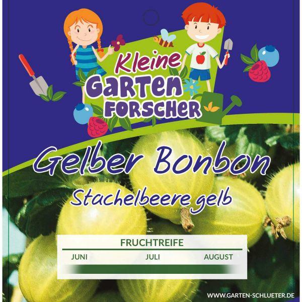 Gelbe Stachelbeere 'Gelber Bonbon' - Kleine Gartenforscher Ribes uva-crispa Bild