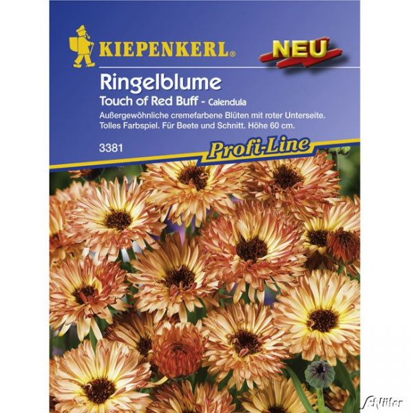 Ringelblume 'Touch of Red Buff' Calendula officinalis Bild