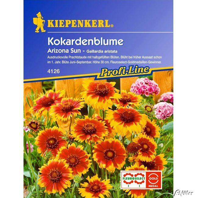 Garten-Schlueter.de: Kokardenblume Arizona Sun Gaillardia aristata